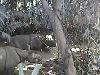 EXTRA Objavili najhľadanejšieho nosorožca