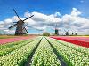 Tulipánové polia v Holandsku