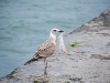 Morské vtáky umierajú od