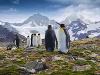 Tučniak kráľovský