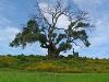 Strom v Etiópii