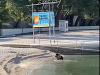 Chorvátsko hlási prvú kuriozitu