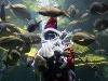 Santa Claus v akvárium,