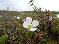 Prírodná rezervácia Kevo, Laponsko