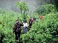 Rwanda-č.1