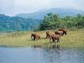 divočina v horách Keraly