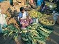 domáci v Kerale