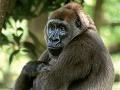Pozorovanie primátov vo voľnej