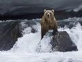 Medvede sú veľkí lovci.