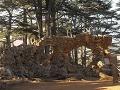 Cédrový háj v Cedry