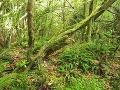V typickom vavrínovom lese
