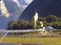 Nový Zéland - Milford