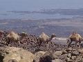 Lac Assal, Džibutsko