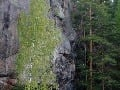 Ristiina, Fínsko