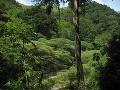 Dažďový prales, Honduras