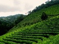 Terasovité ryžové polia, Filipíny