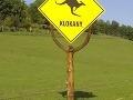 Pozor na klokany, ste