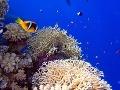 potápanie v Egypte
