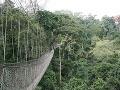 Canopy Walk v Ghane