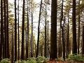 Kašmírske lesy, India