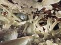 Jaskyňa kryštálov (Crystal Cave