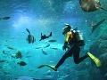 Krásne potápanie je jedným