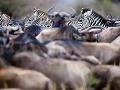 Národná rezervácia Masai Mara,