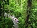 Austrálske dažďové pralesy Daintree
