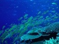 Podmorská krása Veľkej koralovej