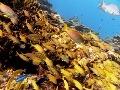 Absolvovanie kurzu potápania vás