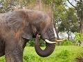 Safarská fauna, Botswana