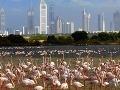 Vtáčia rezervácia Ras al Khor, Dubaj