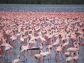 Plameniaci na jazere Nakuru,