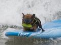 Surfujúci pes