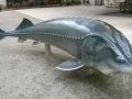 Vyza - pôvodná ryba,