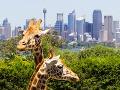 V Sydney žijú žirafy.
