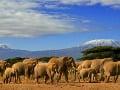 Zachytiť stádo slonov s
