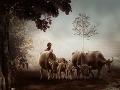 Pastier v Indonézii