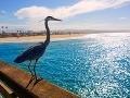 Newportské pláže hostia okrem