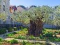 V Getsemanskej záhrade možno