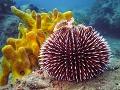 Farbistý podmorský svet zláka