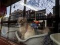 Loď Catboat v Amsterdame