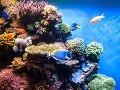 Čistá podmorská impresia, čo