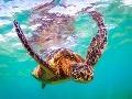 Korytnačky majú svoj vlastný