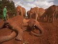 Slony v Keni