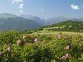 Údolie ruží, Bulharsko