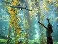 Akvárium Západnej Austrálie, Perth,