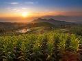 Tabakové polia, Indonézia