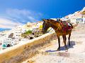 Osol na Santorini
