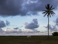 Kôň na Ostrove Sv.